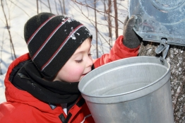 maple sugaring Shutterstock 1 - Copy
